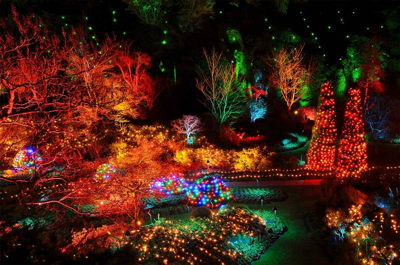 Christmas Garden Lights, Butcharts