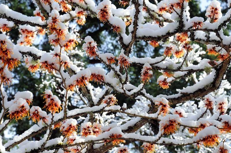 Winter Butchart Gardens